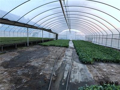 大棚蔬菜基地